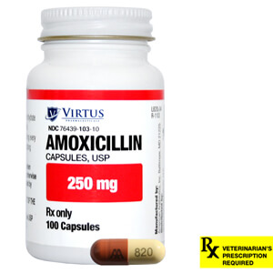 Amoxicillin 250 mg capsule uses synthroid hair loss does for Fish antibiotics azithromycin