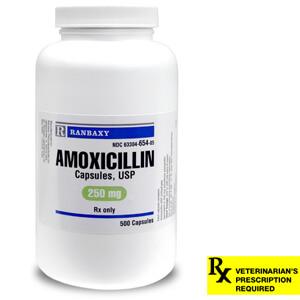 ampicillin dosage