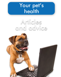 Articles and advice for your pet's health