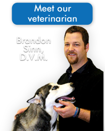 Meet Our Veterinarian