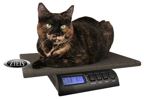 Vet Pet Scale with 12
