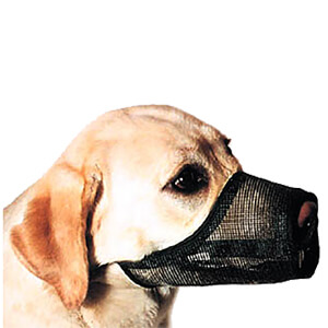 Best Fit Muzzle Size 6