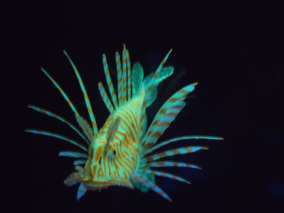 Floating Lionfish Ornament