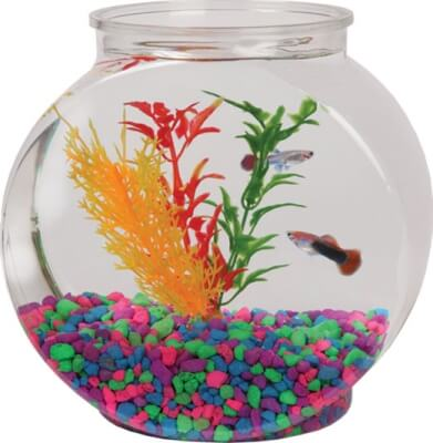 Sphere Pet Bowl - Plastic 1 gallon