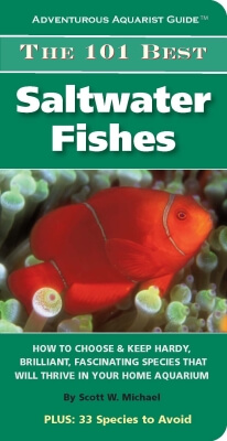 101 Best Saltwater Fishes
