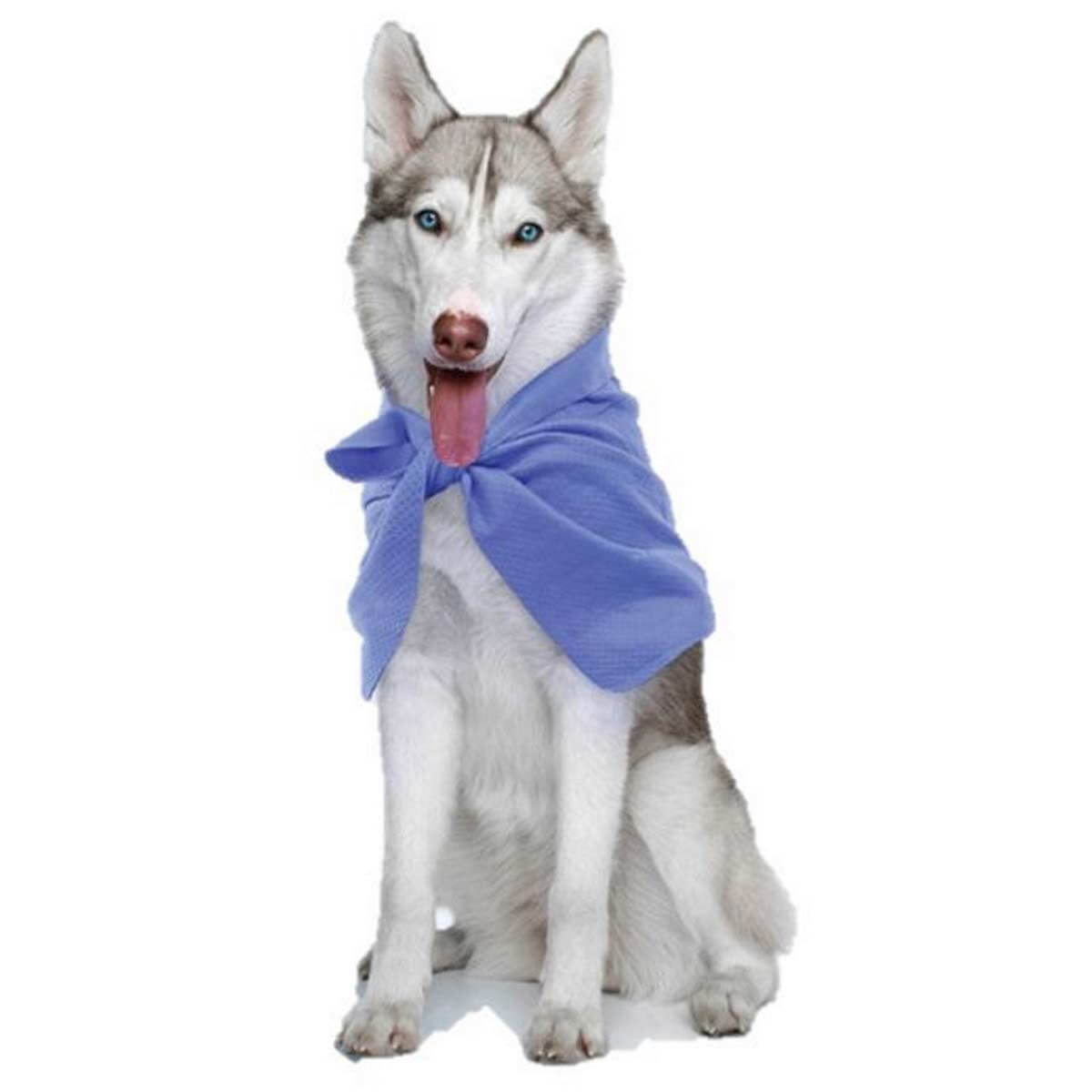 Hugs Pet Products Chillz Wrapz Dog Bandana Blue 18