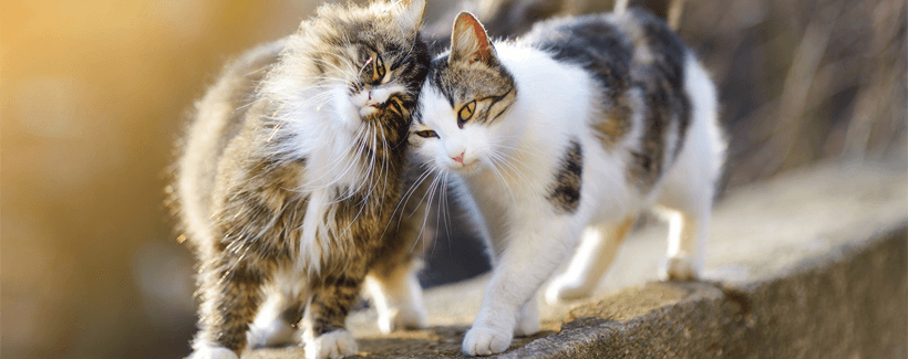 10 Things You May Not Know About Cats