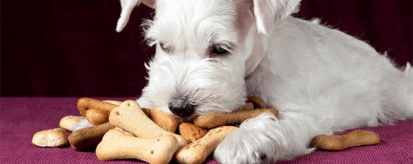 Pets and Treats
