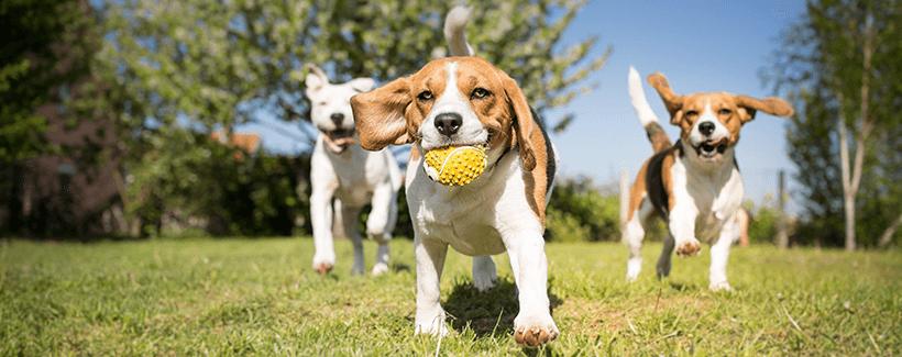 How to Create a Dog-Friendly Yard