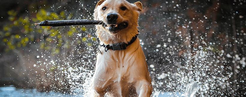 Dog Hyperthermia, Hypothermia and Frostbite
