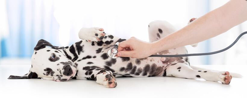 First Vet Visit Establishes Long-Term Puppy Health