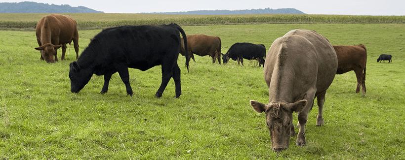 10 Steps for Healthier Calves