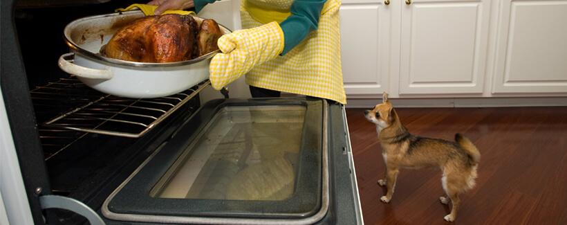 Holiday Food and Pets