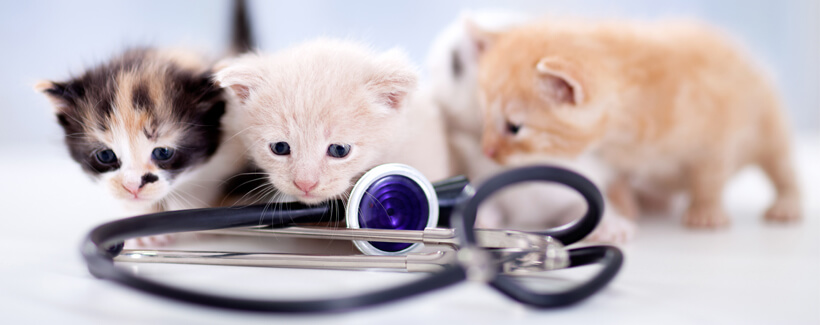 Super Kitten Saves the Day! Your Cat and Their First Vet Visit