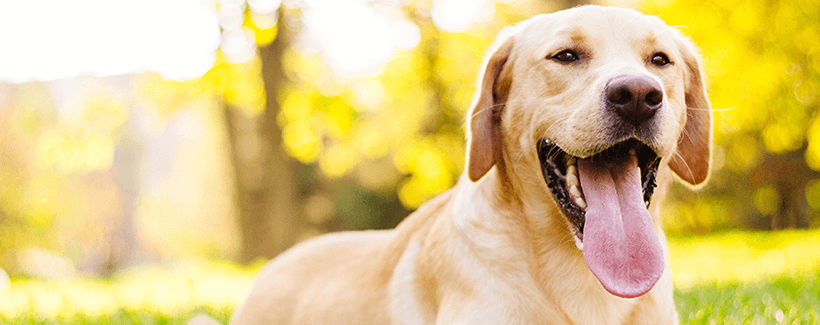 10 Pet Nutritional Facts for to Remember