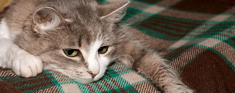 Pet Adverse Reactions to Vaccines