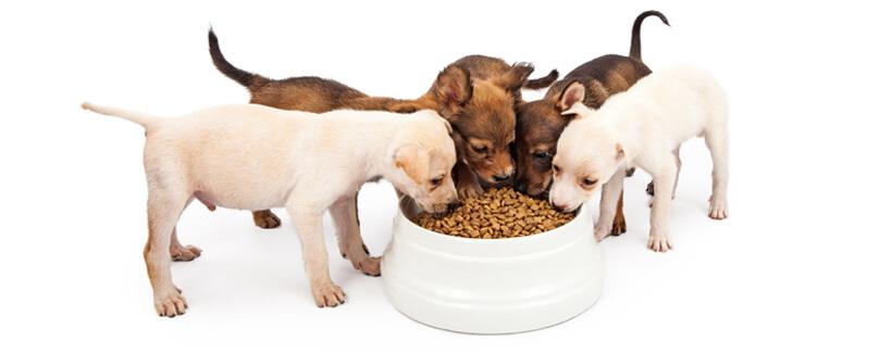 Puppy Power Demands Proper Fuel and Maintenance